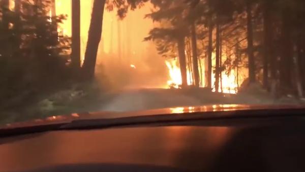 Aux portes de la mort: une évasion incroyable d'un incendie en forêt - Sputnik France