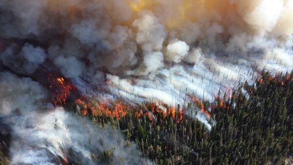 Incendie de forêt - Sputnik France