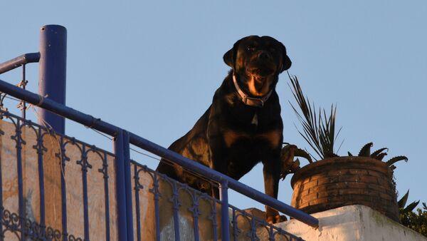 Собака охраняет жилой дом - Sputnik France