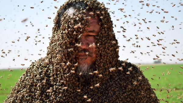 A Saudi man with his body covered with bees poses for a picture in Tabuk - Sputnik France