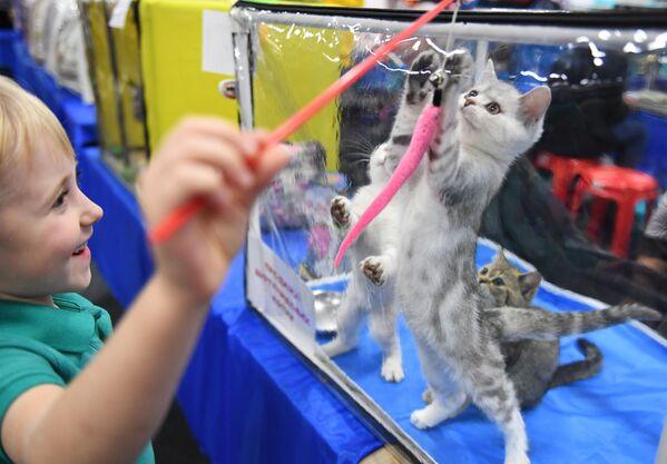 L'exposition de chats Zvezda 2018 à Moscou - Sputnik France