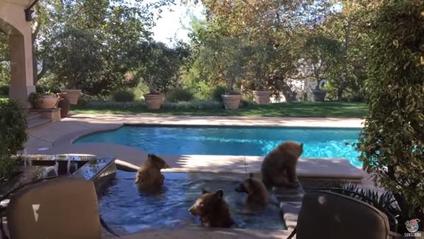 quatre ours dans une piscine - Sputnik France