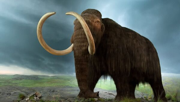 Mammoth model at the Royal BC Museum - Sputnik France