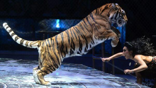 cirque, dressage d'animaux sauvages - Sputnik France