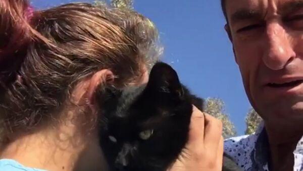 Retrouvailles touchantes avec un chat survivant d'un incendie de forêt - Sputnik France