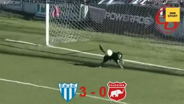 Au bon endroit au bon moment: ce chien fait irruption dans un match et défend les buts - Sputnik France