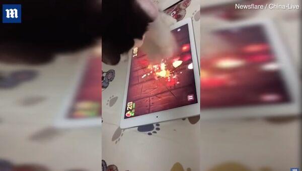 Ninja cat! Clever pet enthusiastically plays tablet games! - Sputnik France