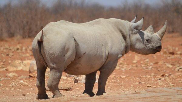 Un rhino - Sputnik France
