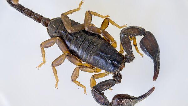 Scorpion - Sputnik France