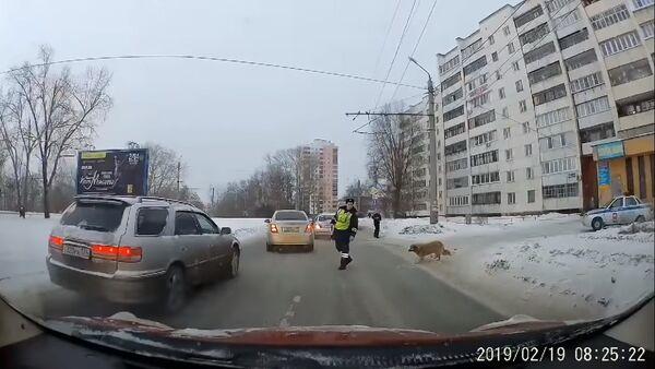 Un policier de la route aide un chien à traverser une rue - Sputnik France