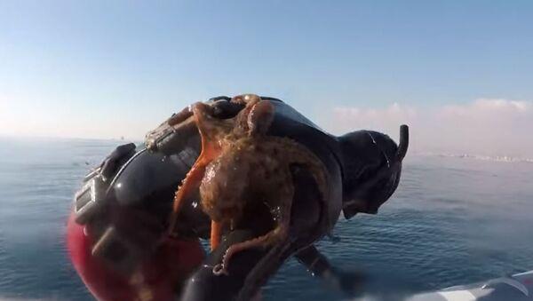 Octopus Clinges to Italian Diver's Back - Sputnik France
