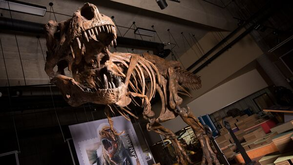 le squelette du Tyrannosaure rex baptisé Scotty - Sputnik France