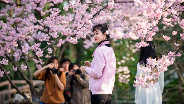 Beauté délicate des cerisiers au printemps: la floraison des sakura à travers le monde - Sputnik France