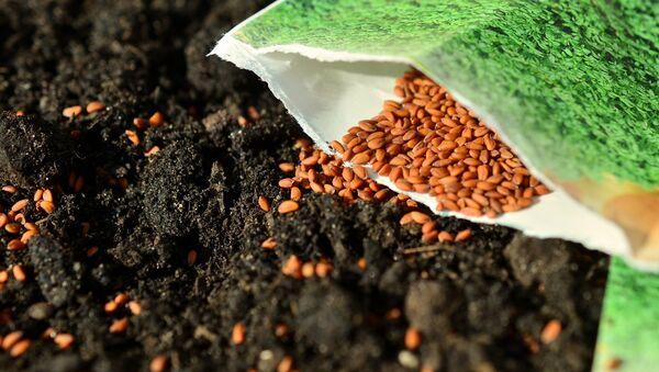 Des semences - Sputnik France