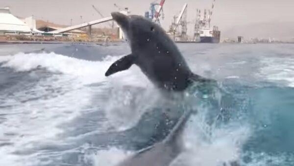 Une promenade en mer pleine d'adrénaline: deux dauphins suivent un hors-bord - Sputnik France