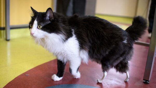 Un chat avec des prothèses - Sputnik France
