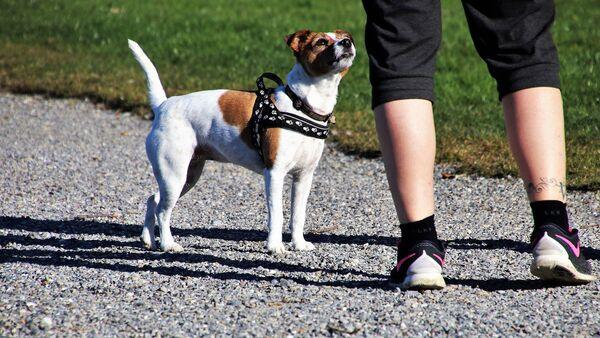собака - Sputnik France