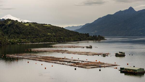Elevage de saumon au Chili - Sputnik France