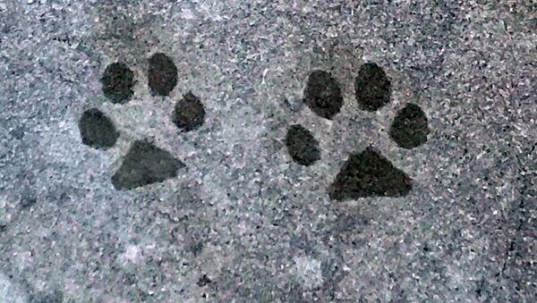 Les empreintes de chien (image d'illustration) - Sputnik France