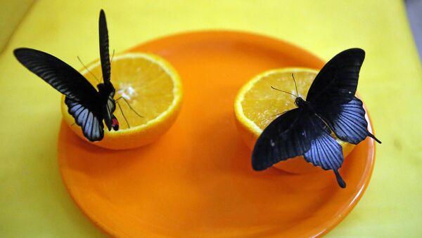 Oranges et papillons - Sputnik France