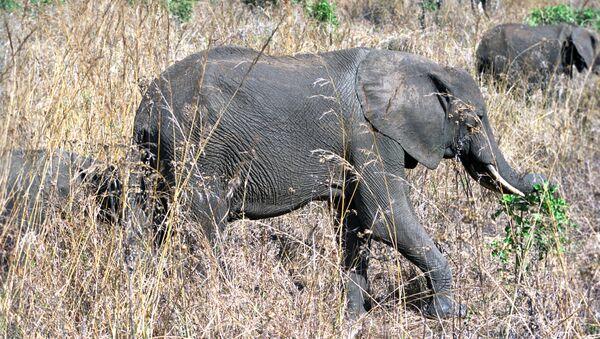 Elephants - Sputnik France