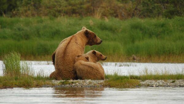 Медведица с медвежатами - Sputnik France