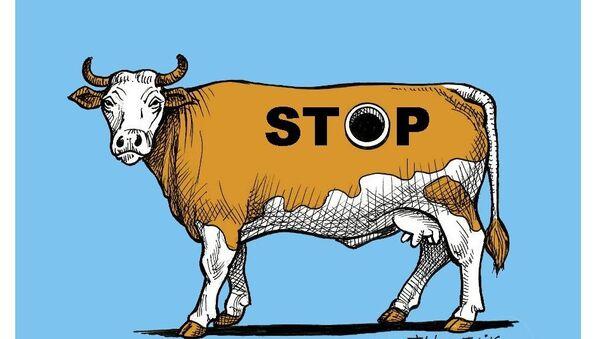 Bien-être animal: les images choquantes des vaches «à hublot» - Sputnik France