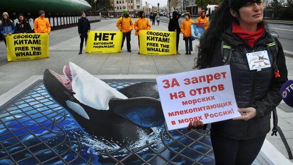 Manifestation contre la «Prison aux baleines»  - Sputnik France