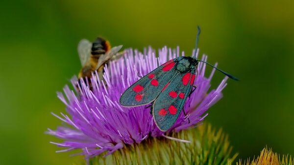 Insectes, papillons - Sputnik France