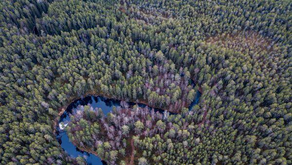 лес деревья arbres forêt - Sputnik France