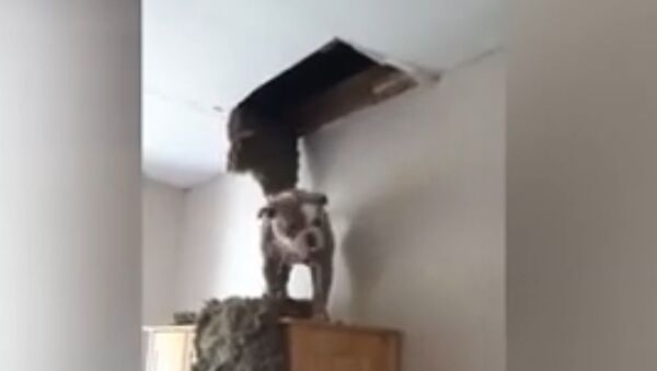 Woman in Scotland discovers her dog has fallen through the roof - Sputnik France