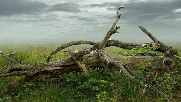Un arbre cassé - Sputnik France