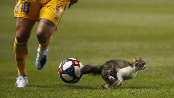 Un chat sur un terrain de football lors d'un match opposant les Tigres UANL au Real Salt Lake dans un stade à Salt Lake City, aux États-Unis. - Sputnik France