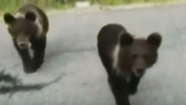 En Sibérie, un conducteur a failli devenir la victime d'ours - Sputnik France
