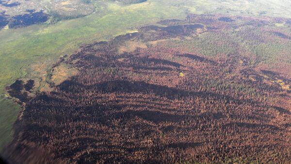 La vue sur des forêts brûlées depuis un avion Il-76 MD du ministère russe de la Défense, participant à l'extinction des feux de forêt dans la région de Krasnoïarsk - Sputnik France
