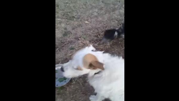 Emu Plays With Pup    ViralHog - Sputnik France
