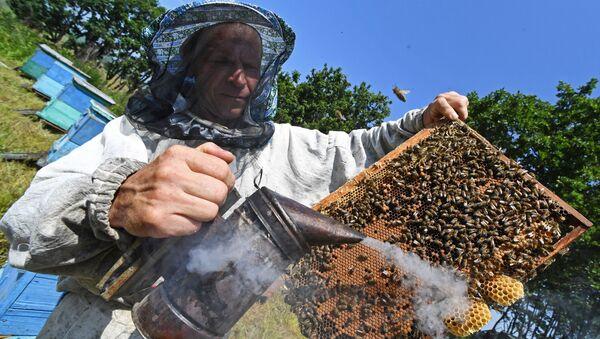 Un apiculteur (image d'illustration) - Sputnik France