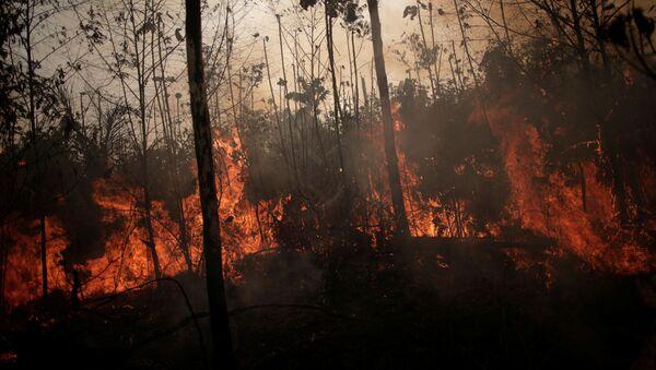 Forêt amazonienne en flammes - Sputnik France