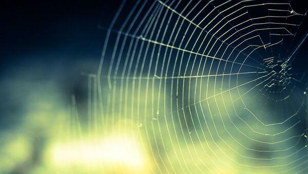 Toile d'araignée - Sputnik France