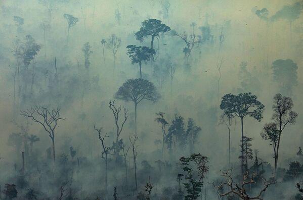 Une terre couverte de cendre: l'Amazonie ravagée par des incendies  - Sputnik France
