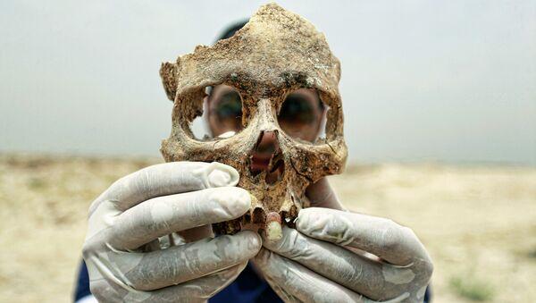 Crâne humain - Sputnik France