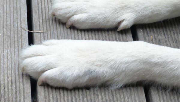 Лапы собаки - Sputnik France