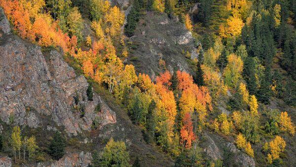 L'automne en Sibérie ou toutes les nuances de jaune  - Sputnik France