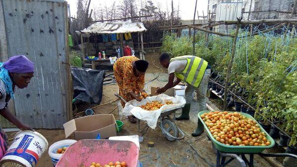 Sur le site de production d'Agrolight dans le nord d'Abidjan - Sputnik France
