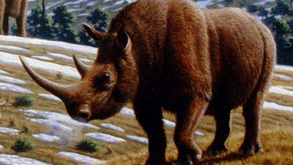 un rhinocéros laineux - Sputnik France