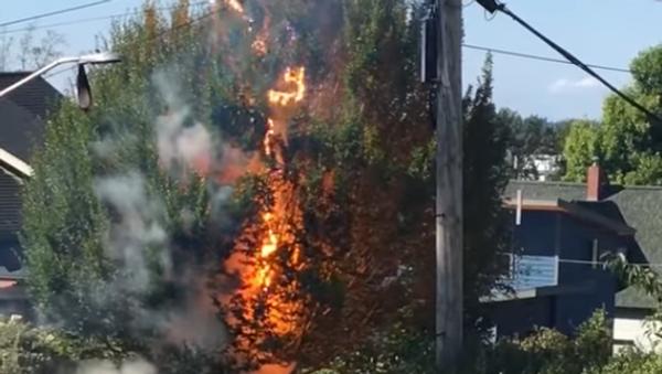Éblouissant mais dangereux! Une ligne électrique transforme un arbre en fusible - Sputnik France
