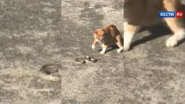 Un chat de gouttière tue un serpent échappé d'un zoo pour enfants - Sputnik France