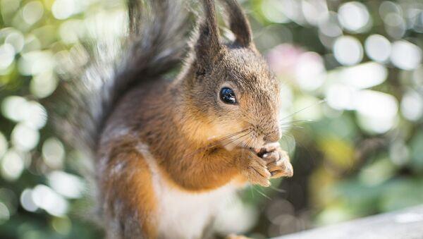 Un écureuil - Sputnik France
