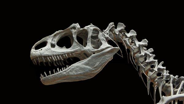 Squelette de dinosaure - Sputnik France