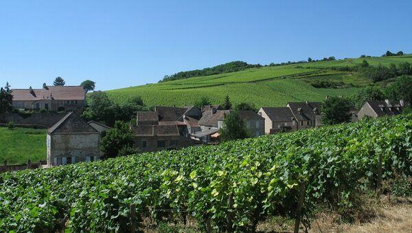 Un vignoble de Bourgogne - Sputnik France